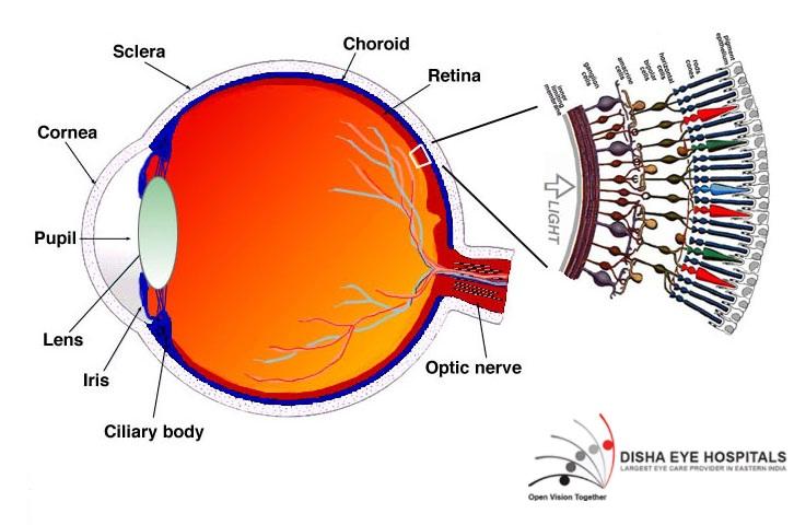 retina specialist in Kolkata